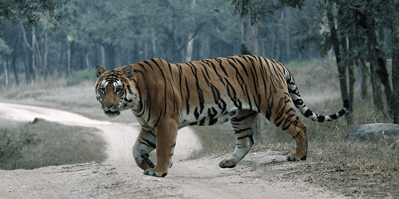 bandhavgarh-footloose-min