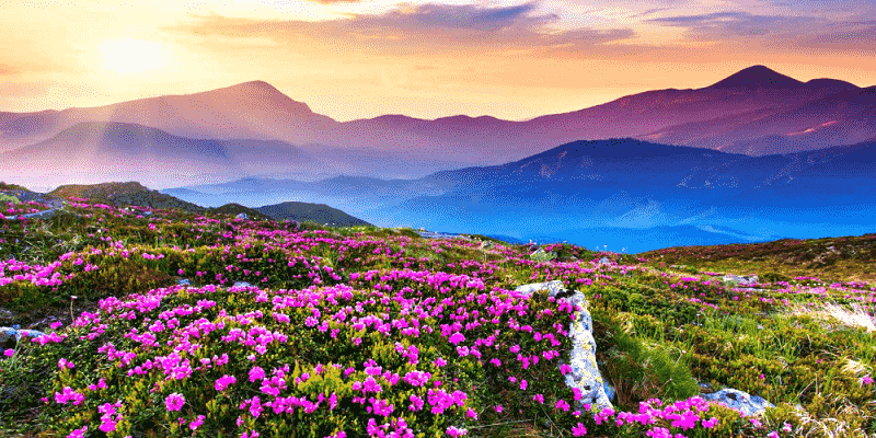 valley-of-flowers-footloose-min